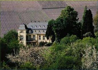 Introducción al Riesling: esos vinos inpronunciables