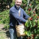 Las picotas se recogen una a una a mano y se colocan en cestas