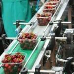 En la cooperativa se envasan las cerezas y se preparan para su envío