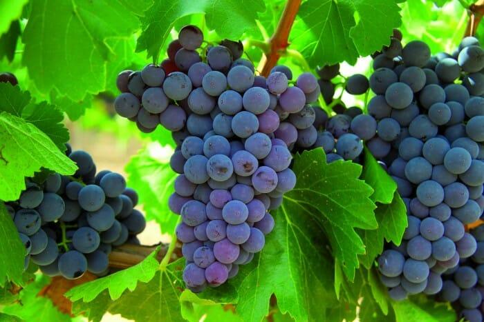 Ahora también podemos utilizar el vino como cosmético, gracias a la nueva línea de productos Vino-cosmética Bio de Viñali