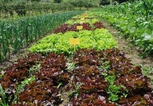 Se da la paradoja de que España es el segundo país europeo productor de productos ecológicos y uno de los que menos los consume | Imagen: vidaecologica.info