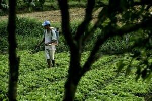 Las mutuas agrícolas han establecido una relación entre los fertilizantes químicos y pesticidas y el 73% de las enfermedades y dolencias