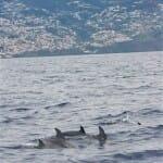 Con un poco de suerte, los delfines se pueden avistar muy cerca de la costa