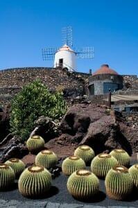 El Jardín de los cactus cuenta con miles de ejemplares
