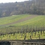 Los viñedos protegidos a los piés de la montaña conforman un paisaje que se extiende a uno y otro lado de nuestra vista