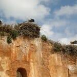 Cigüeñas en La Chellah