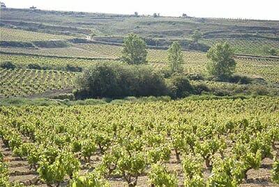Desde hace algun tiempo, Vega Sicilia ha estado comprando parcelas de viñedos viejos en la zona de San Vicente de la Sonsierra