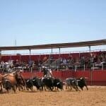 A Campo Abierto muestra una recreación de la vida en la campiña jerezana, de la cría del toro bravo y del mundo del caballo
