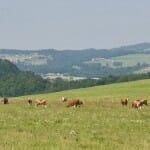 Prados y vacas conforman un paisaje idílico en esta zona de Suiza