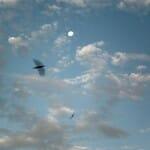 Luna, nubes, pájaros... Aire