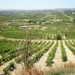 Rioja Alavesa, tierra de vino