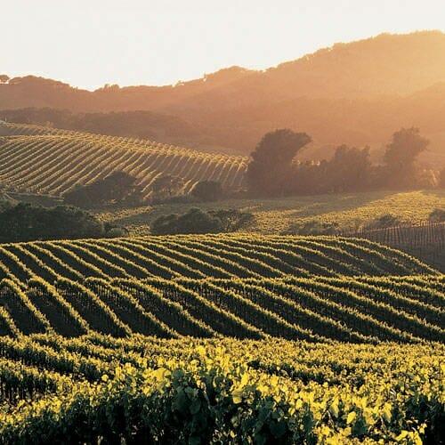 Se mantiene el crecimiento de las exportaciones españolas de vino durante el primer semestre de 2010, un dato que contrarresta el descenso de consumo de vino a nivel nacional
