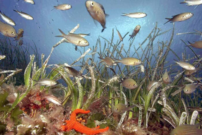 La Semana de Fotografía Submarina nació con el objetivo de inculcar la fotografía submarina y promocionar los fondos marinos de la isla de Formentera