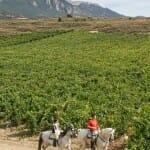 En esta zona las viñas se convierten en un todo con la gente y la tierra