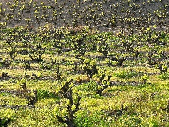 No tenemos mejores vinos que nadie del nuevo mundo, y que para conseguir este resultado tan mediocre hemos cambiado por completo el sentido del territorio inundándolo de cabernet o merlot