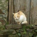 El gato a la puerta