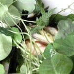 Lucio y col con ensalada de raíz y verbena