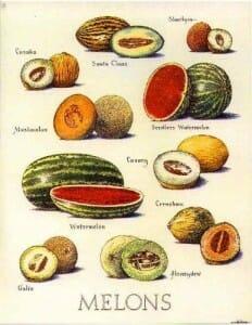 Tipos de sandía y melón