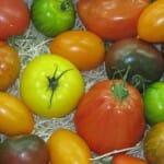 Tomates. Mercado de Rungis