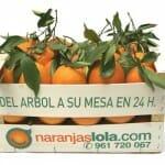 Naranjas Lola: del árbol a la mesa en 24 horas