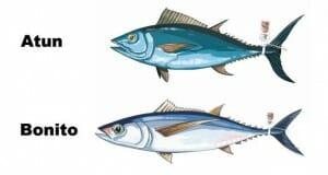 Atún y el bonito