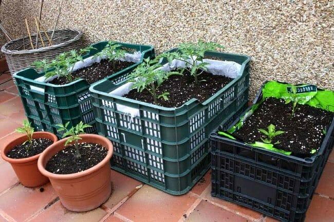 Un huerto en casa para sembrar con los ni os nutricion y consumo - Pequeno huerto en casa ...