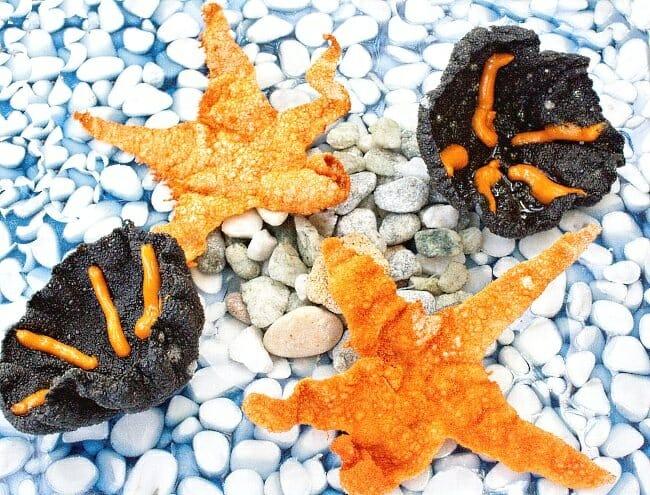 Estrella de mar entomatada y erizo de mar