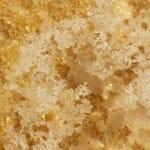 Flor de sal aún flotando en la salmuera