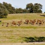 En los safaris fotográficos por el campo se pueden contemplar las especies que viven en la finca