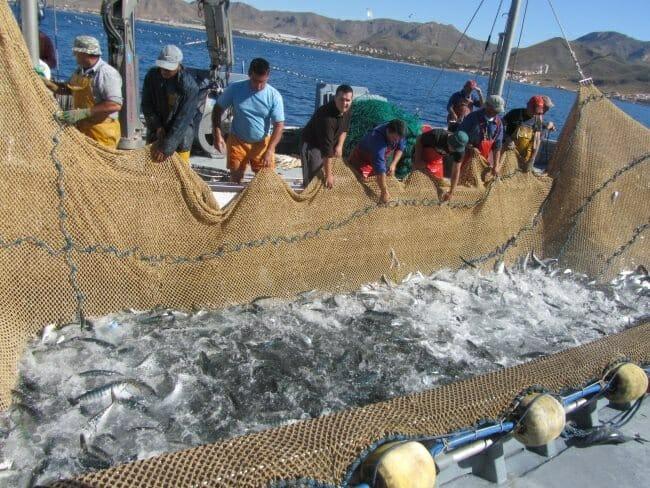 Los pescadores recogen las redes