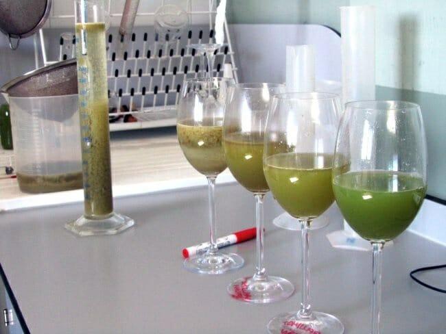 Mostos en el laboratorio