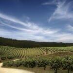 Las rutas del vino de Penedés y Jerez, las más visitadas