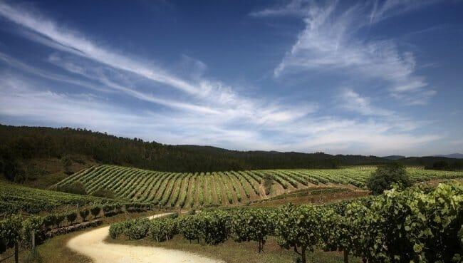 Bodegas Terras Gauda - Ruta do Viño Rías Baixas
