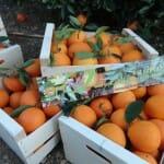 Naranjas María: ya puedes recibir en tu casa las primeras naranjas Navelina