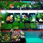 Verduras con superpoderes y cócteles verdes recién hechos