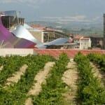 Cinco rutas del vino para descubrir