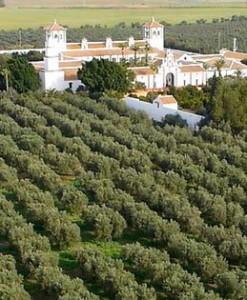 Hacienda Guzmán, rodeada de olivos