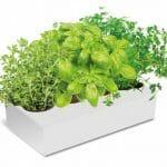 Spicebox, cultiva tus propias hierbas aromáticas