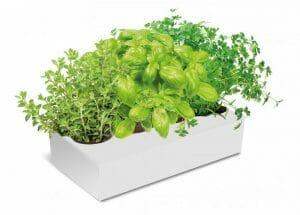 Kit de iniciación al huerto hurbano Spice Box