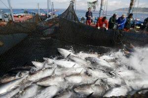 Pesca de atún de almadraba