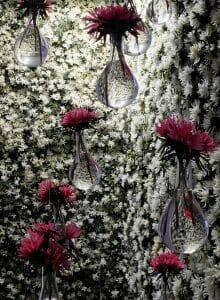 Belleza en flor