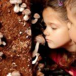 Fungiturismo en La Rioja: champiñones y setas, de la naturaleza al plato