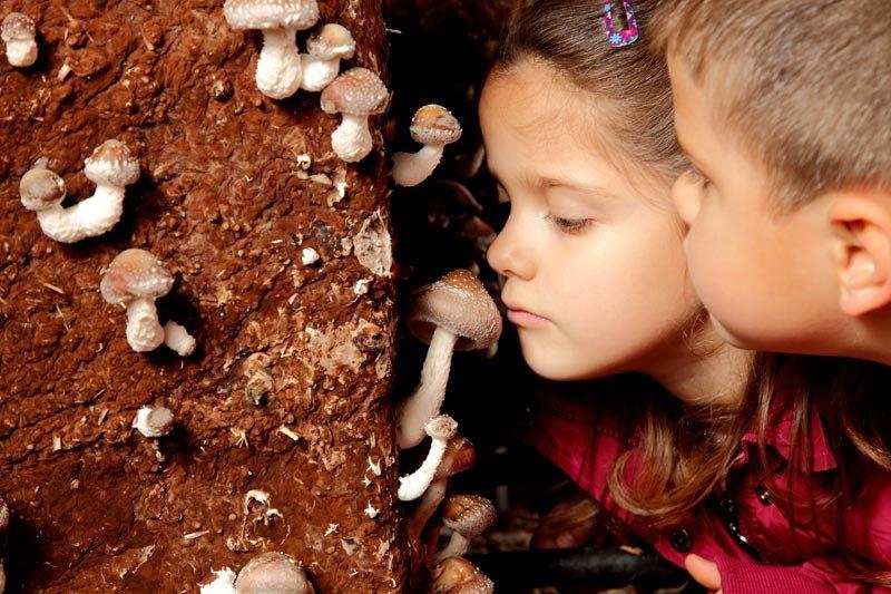 Fungiturismo, un plan perfecto para hacer en familia en La Rioja