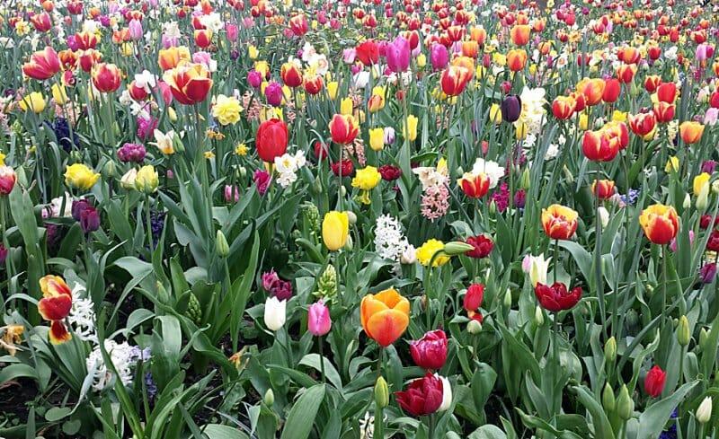 ¡Ya es primavera en Gante! Descubre la ciudad belga a través de sus flores