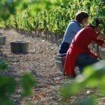 Siete bodegas para disfrutar de la vendimia y el vino este otoño