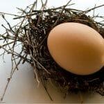Todo sobre los huevos: gallinas felices, huevos riquísimos