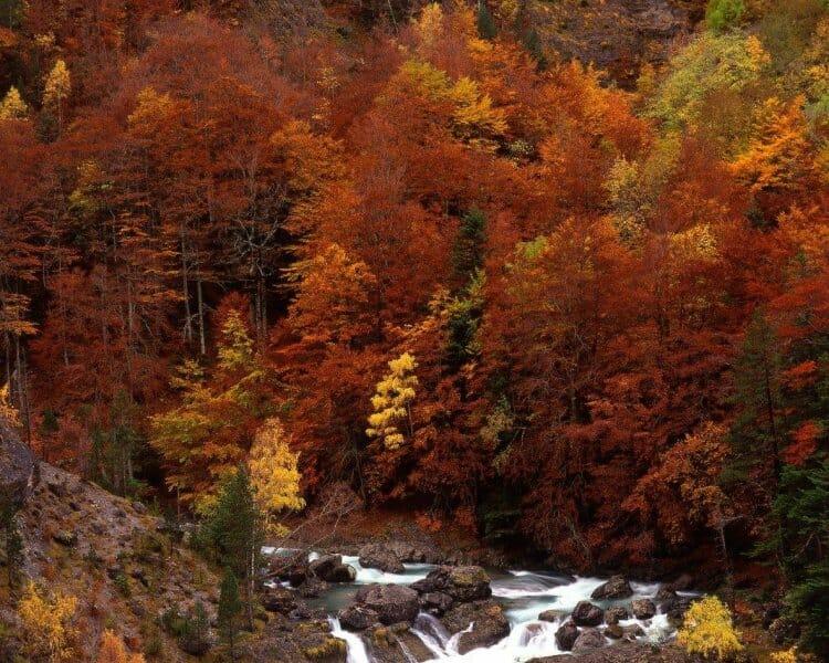 Los bosques de la Sierra de Cebollera se tiñen de rojo