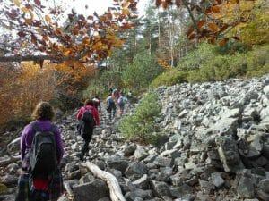 Apúntate a una marcha por el bosque en otoño