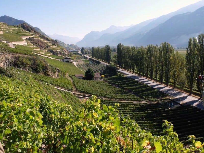 Un trío de ases suizo: trenes, vino y chocolate