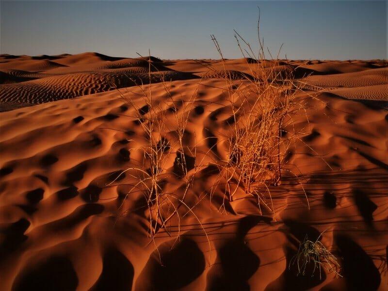 En busca del desierto florido en Túnez
